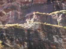 Mountain goats up on the ledge.